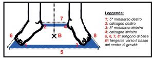 Training Balance disegno